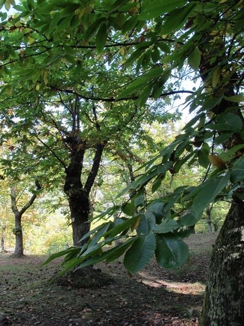 20121027-112758.jpg
