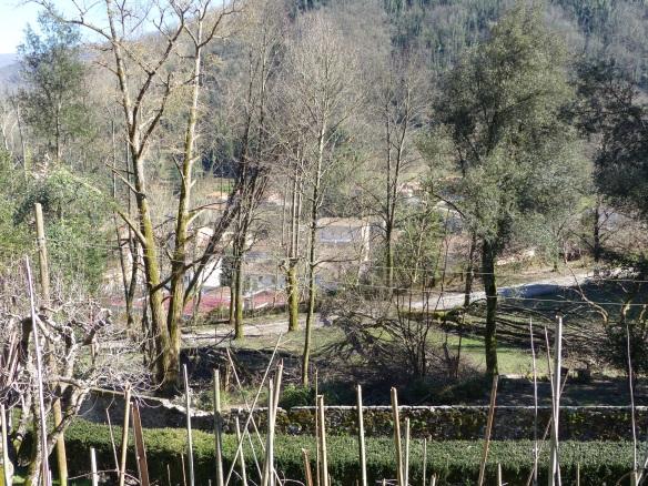 Villa Ada garden