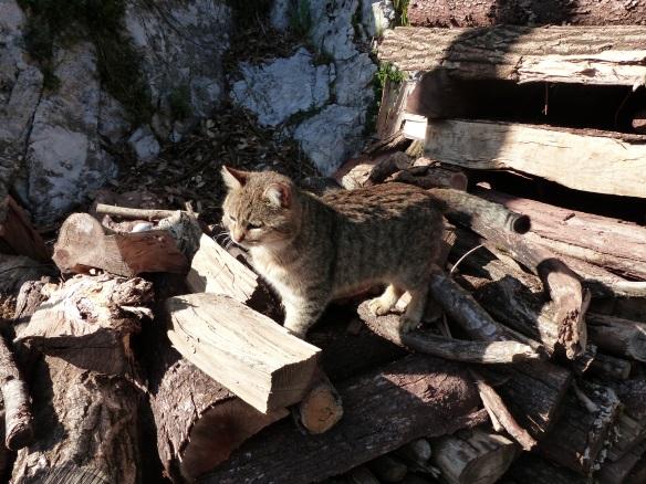 Lucchio cat