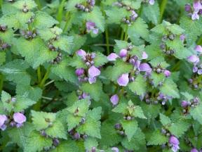 Lucchio wild flowers