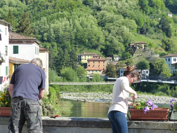 pansies on the bridge