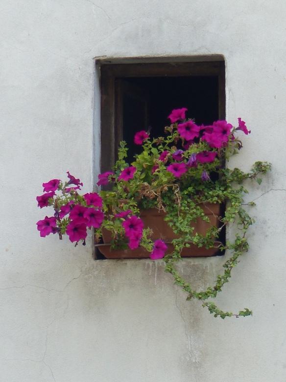 Bagni di Lucca flowers