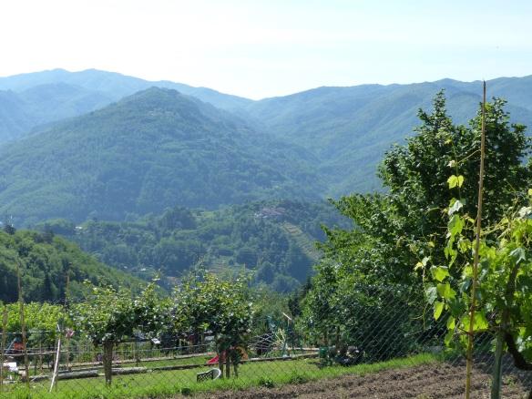 Granaiola