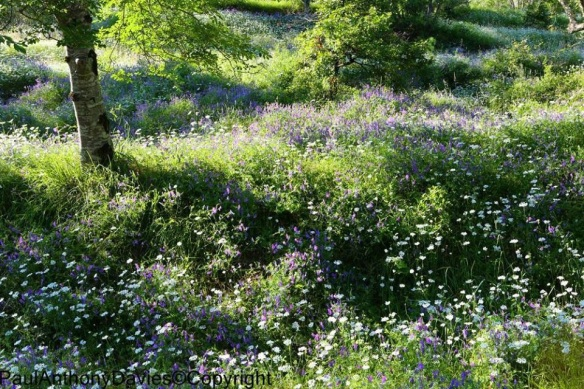 San Cassiano wildflowers