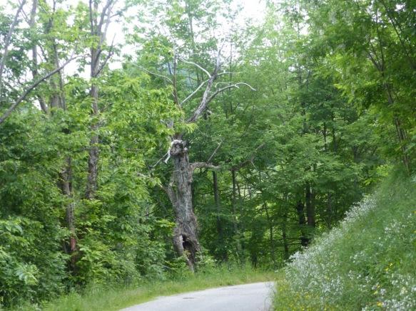 Chestnut forest Montefegatesi