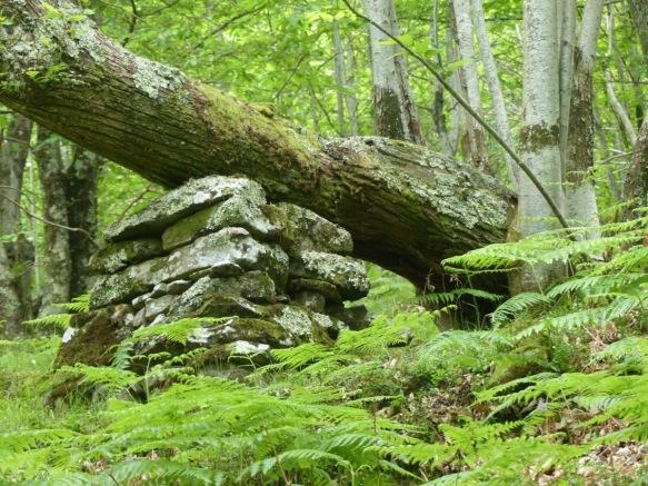 Montefegatesi chestnut forest