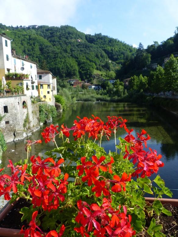 Geraniums Ponte a Serraglio